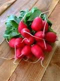 Ravanelli rossi Fotografie Stock Libere da Diritti