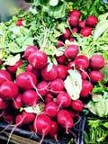 Ravanelli rossi Fotografia Stock