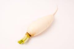 Ravanello bianco Fotografia Stock