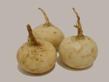 Ravanello bianco Immagini Stock