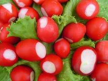 Ravanello del giardino sull'insalata fresca dello strato Immagine Stock