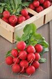 Ravanello rosso Fotografia Stock