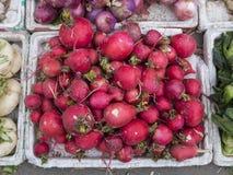 Ravanello rosso Fotografie Stock Libere da Diritti