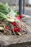 Ravanello rosso e cipolla di inverno che sono lavati immagine stock libera da diritti