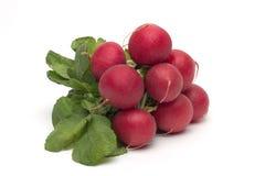 Ravanello rosso fresco isolato Fotografia Stock
