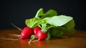 Ravanello rosso organico fresco su fondo nero video d archivio