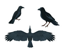 Raven. This is a  illustration of raven Stock Photo