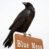Raven Photo libre de droits
