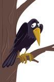 Raven Images libres de droits