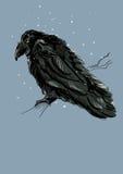 raven Foto de Stock