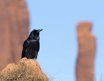 raven Imagem de Stock