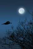 Raven Photographie stock libre de droits