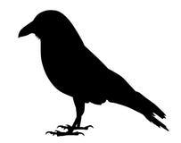 raven Imagen de archivo