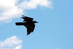 Raven Against Sky & Clouds Royalty Free Stock Photos