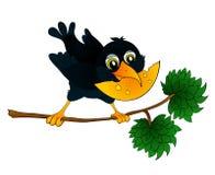 Raven auf einem Zweig mit Käse in seinem Schnabel Stockfotografie