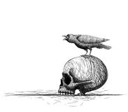 Raven bird perch on skull.  on white. Hand drawing vecto Stock Image