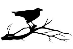 Raven bird silhouette. Raven bird on tree branch - black vector silhouette on white Royalty Free Stock Image