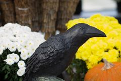 Raven Bird Statue Still life of flowers straw and white and yellow flowers pumpkin Stock Photos