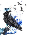 Raven. Black and silver drawing on a blue green watercolor splash background Stock Image