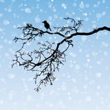 Raven on a branch. Winter illustration, silhouette Royalty Free Stock Photos
