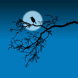 Raven on a branch. Night illustration, silhouette Royalty Free Stock Images