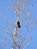 Raven on a branch Stock Photos