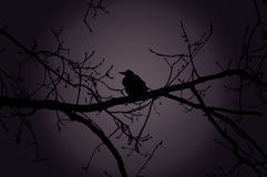 Raven on a branch at night in forest Royalty Free Stock Photo