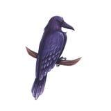 Raven cartoon illustration. Raven hand-drawn cartoon illustration Stock Photography
