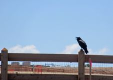 Raven cawing on fence post Royalty Free Stock Images