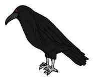 Raven. Creative design of raven draw Royalty Free Stock Photo