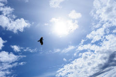 Raven or crow in the blue sky Royalty Free Stock Image