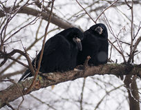 Raven and crow at brach Stock Photos