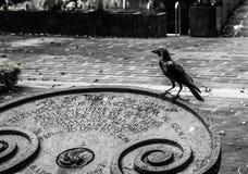Raven_dark foto de archivo