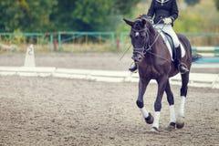 Raven el caballo con el jinete que camina en competencia de la doma Imágenes de archivo libres de regalías