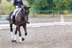 Raven el caballo con el jinete que camina en competencia de la doma Foto de archivo