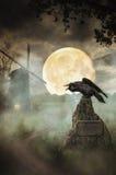Raven el camino
