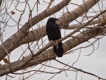 Raven en mars photographie stock libre de droits
