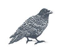 Raven Engraving Illustration noire Image libre de droits