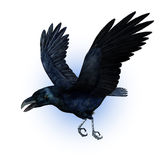 Raven in Flight Royalty Free Stock Photos