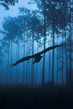 Raven flying through night forest vector illustration