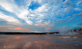 Raven flying past Grand Prismatic Spring under sunset cloudscape in the Midway Geyser Basin in Yellowstone National Park. In Wyoming USA stock photography