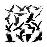 Raven hawk eagle gulls crow. Silhouette raven hawk eagle gulls crow Stock Photography