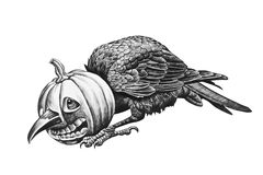 Raven head stuck in a pumpkin. Pencil drawing illustration Royalty Free Stock Image