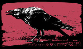 Raven illustration Royalty Free Stock Images