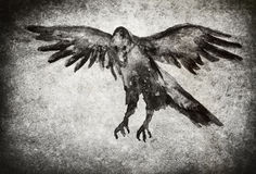 Raven illustration with texture Royalty Free Stock Image