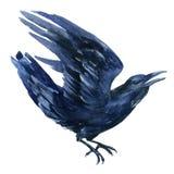 Raven illustration. Stock Images