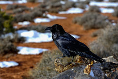 Raven, island in the sky, ut Royalty Free Stock Photo