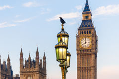 Raven on lampost at Houses of Parliament in early winter morning Royalty Free Stock Images