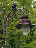 Raven on a lamppost in the park Royalty Free Stock Photo