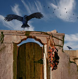 Raven Landing. A raven is about to land on an old adobe doorway - Photo with 3D renders Royalty Free Stock Photos